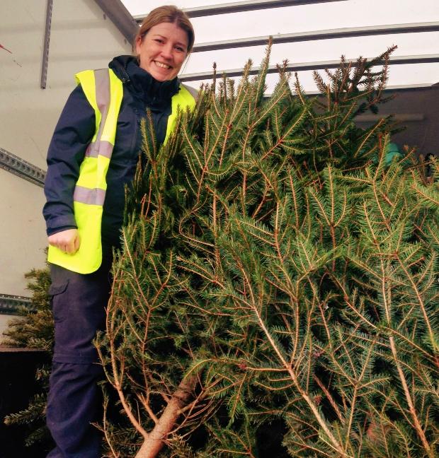 Christmas tree cycle